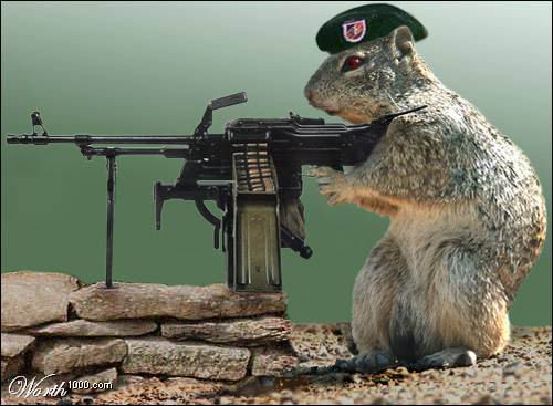 armedsquirrel