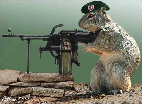 armedsquirrel