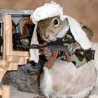 squirrel with ak47.jpg