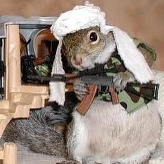 squirrel with ak47.jpg