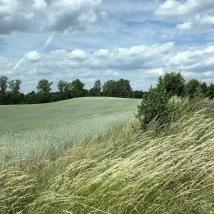 The Polish prairie (not MN!)